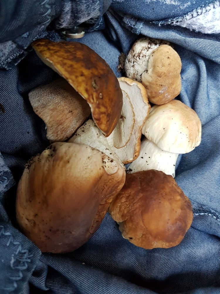 белые грибы в Черногории