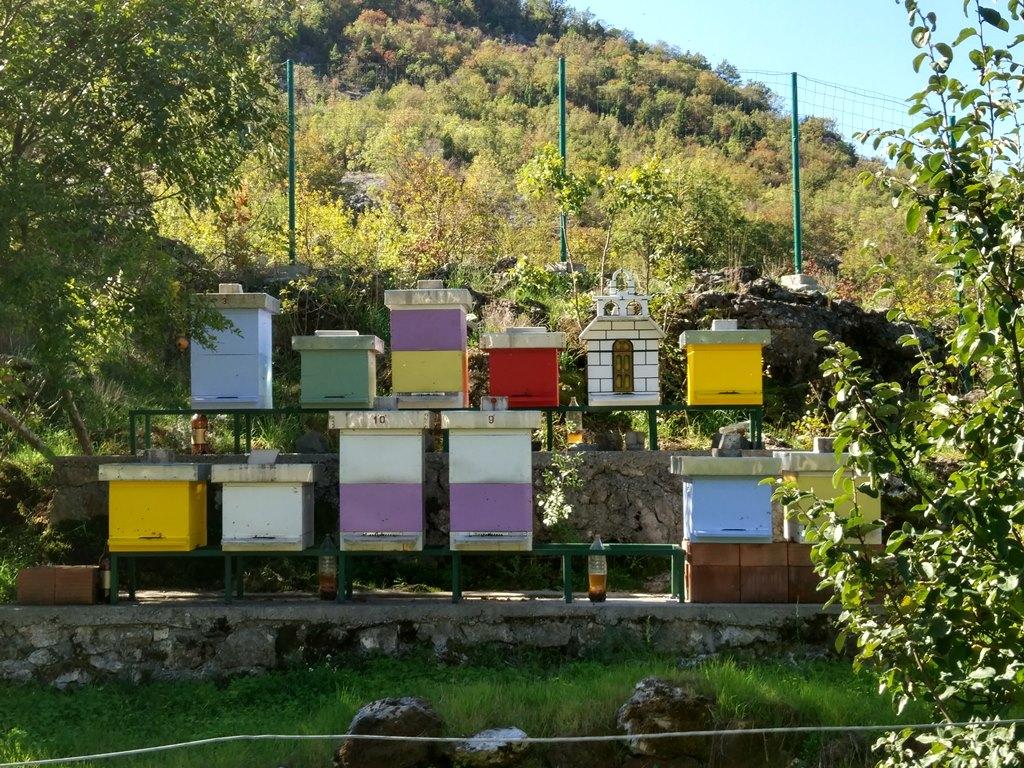 мед Черногория подарок