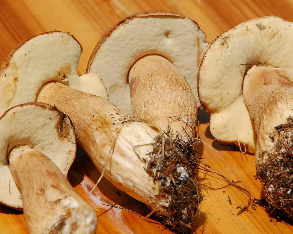 грибы в Черногории