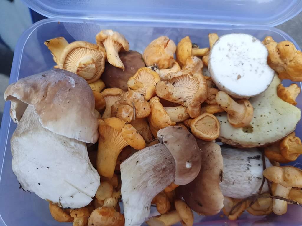 грибы в Жабляке