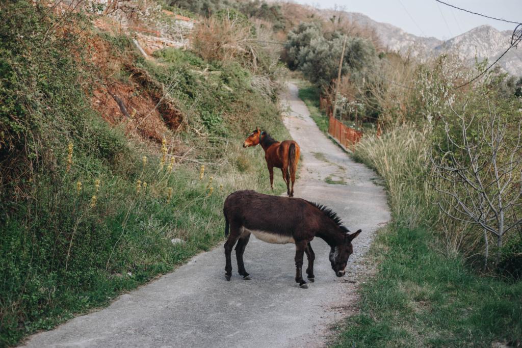 деревня у моря в Черногории