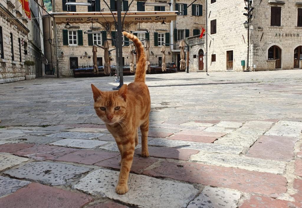 коты в Черногории