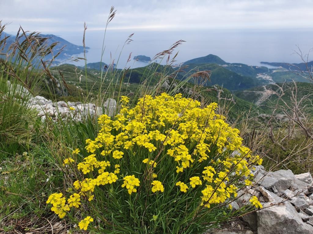поход по горе Ловчен Черногория