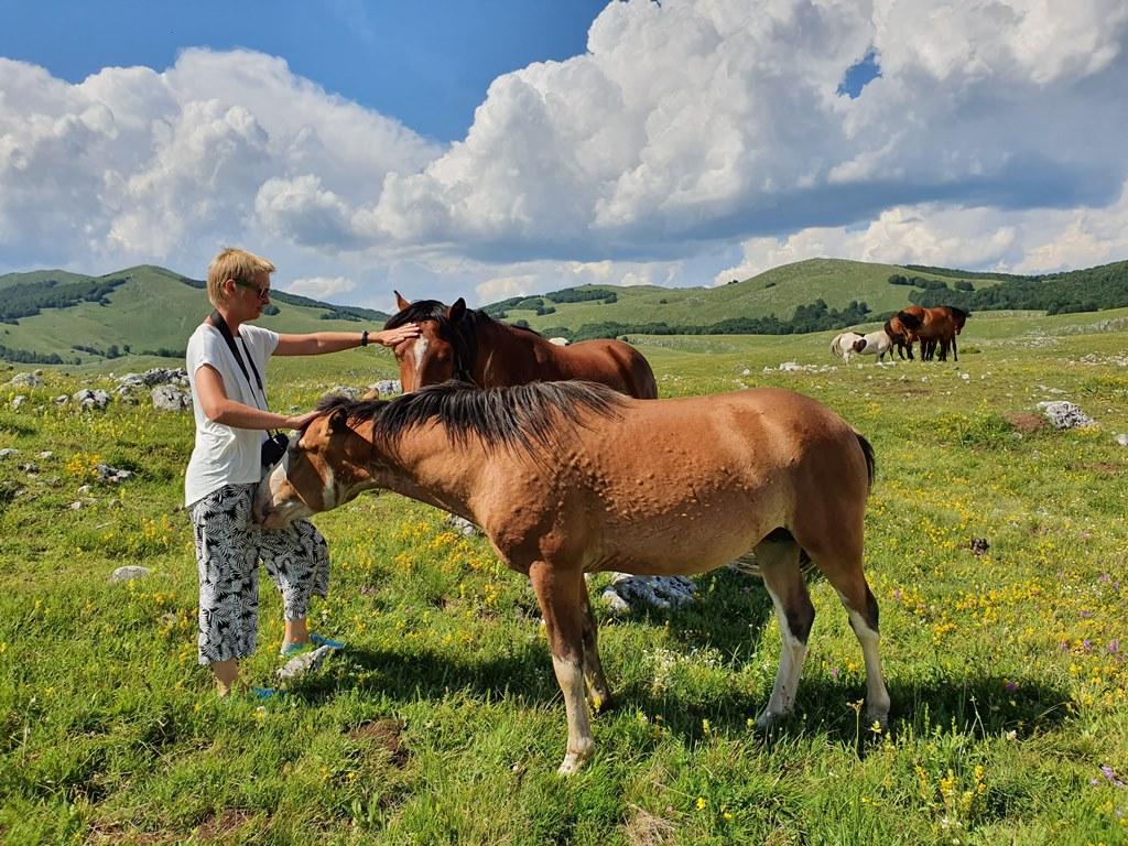 прогулки на лошадях в Черногории