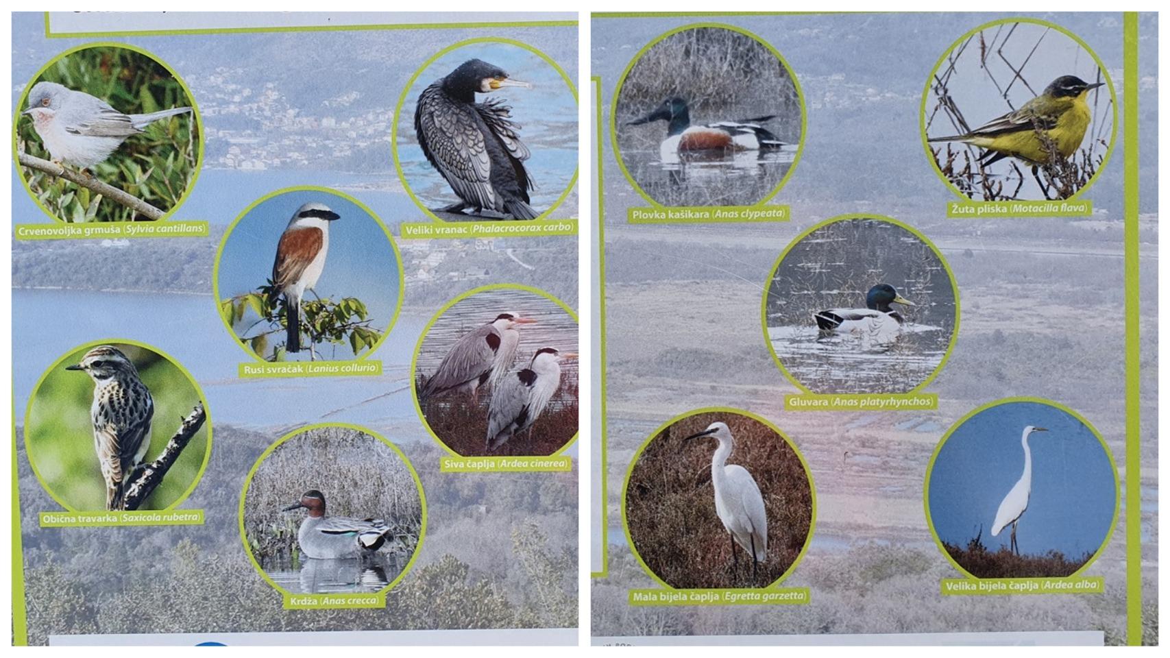 Черногория птицы