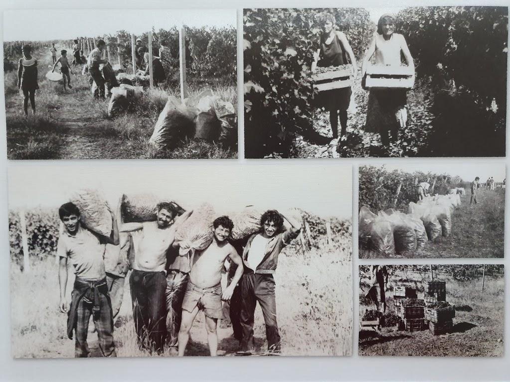 винодельня плантаже