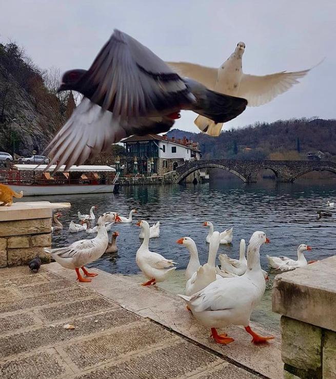 птичий заповедник черногория