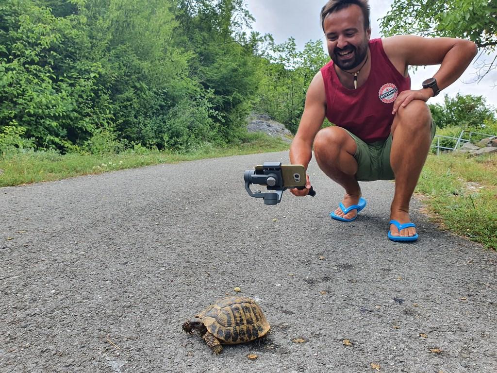 черепахи в Черногории