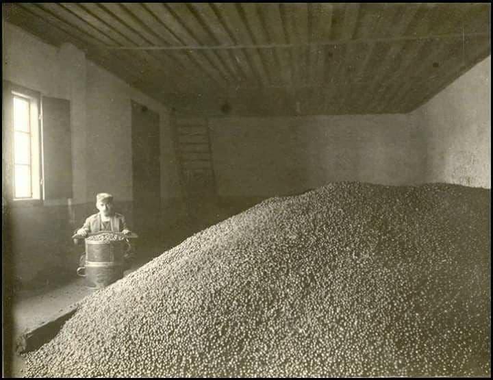 старые фото оливки в Черногории
