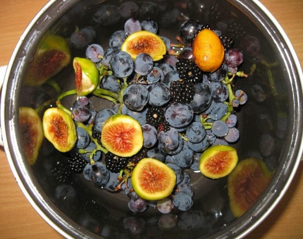 какие фрукты растут +в черногории