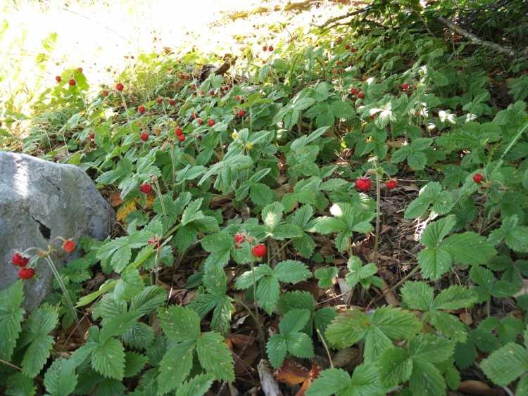 фрукты ягоды в черногории в августе
