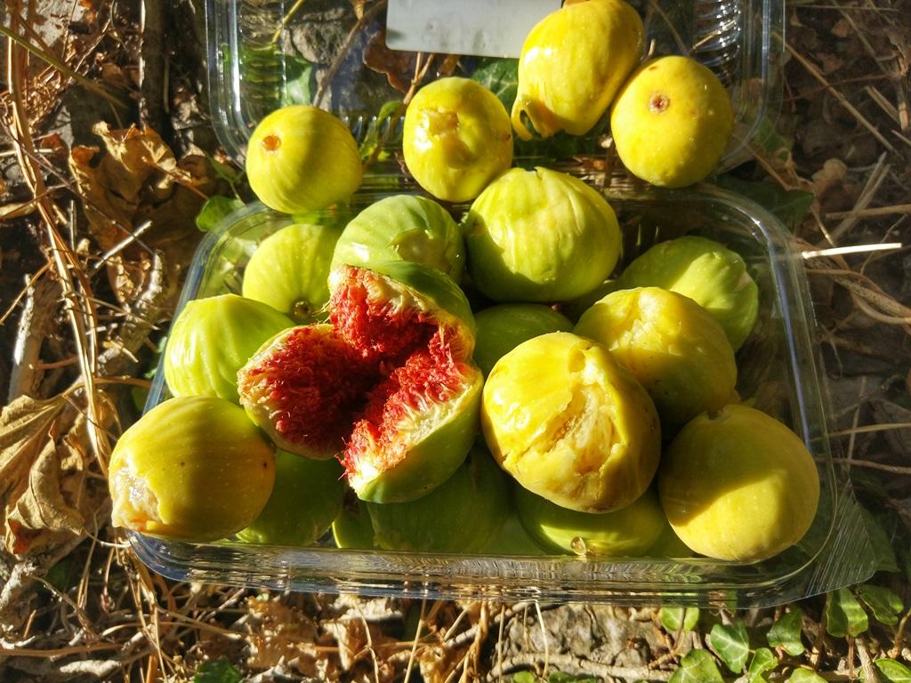 какие фрукты +в черногории +в июне