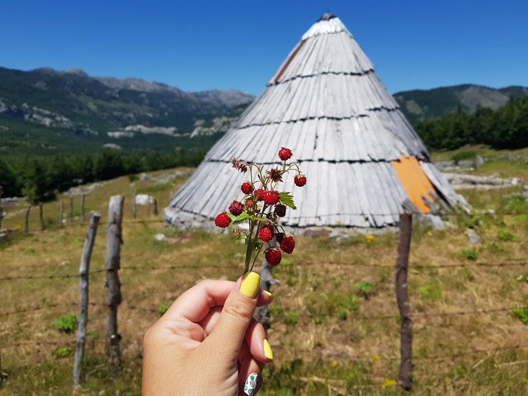 земляника в черногории