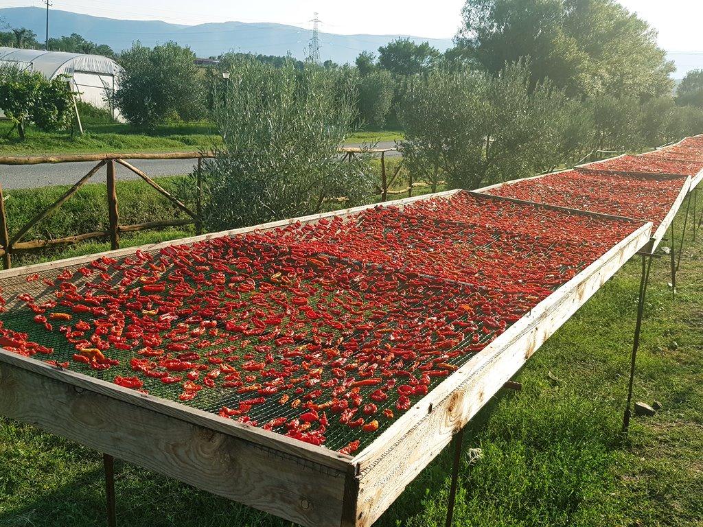 ресторан ферма в Албании
