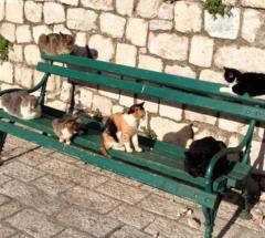 площадь котов в Которе