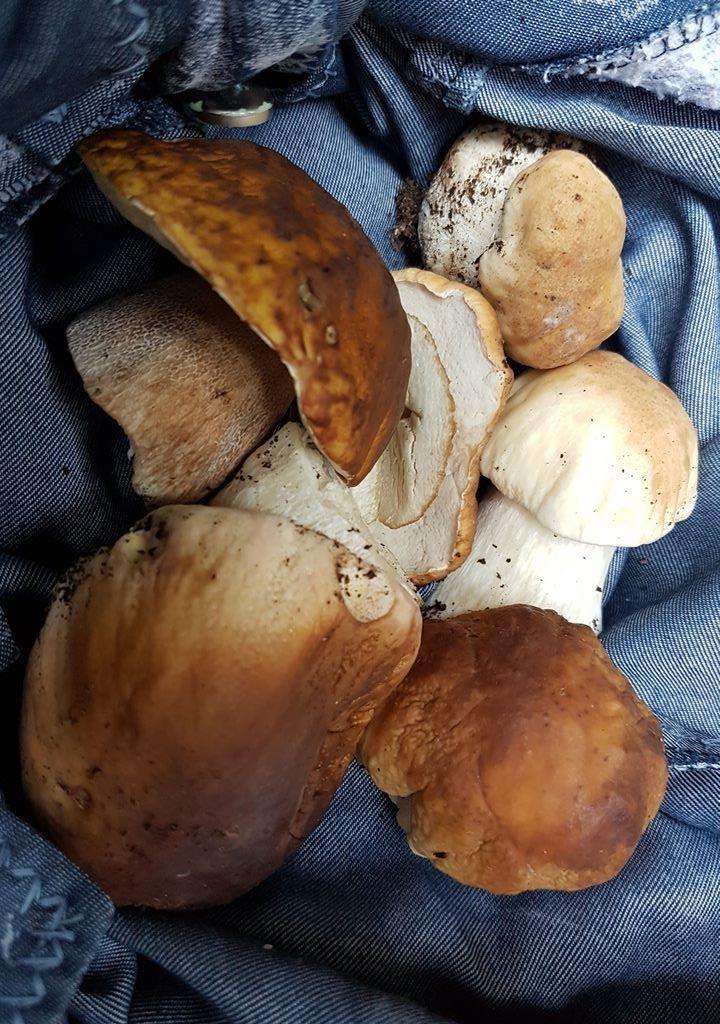 белые грибы в Жабляке