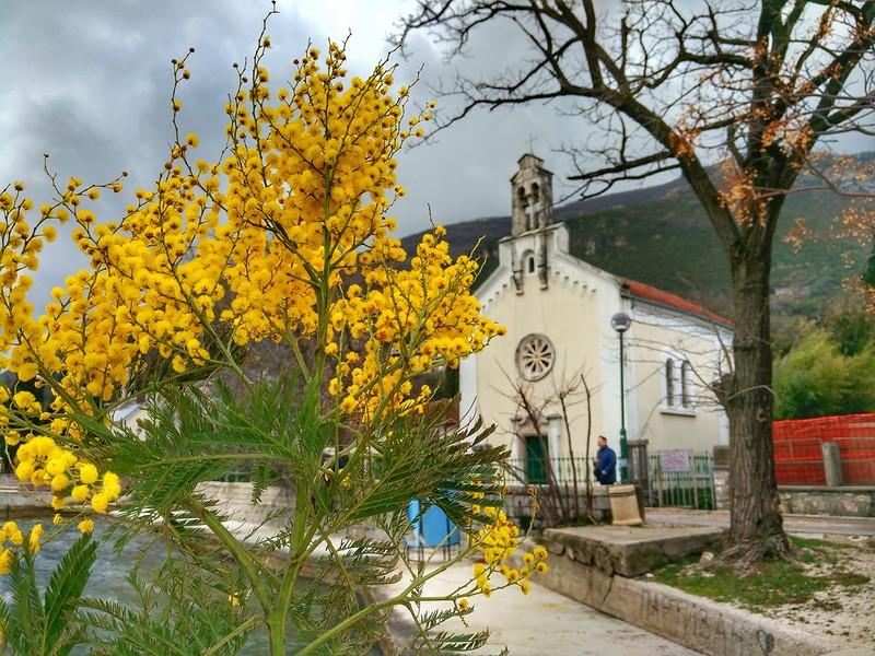 мимоза праздник Черногория 2019