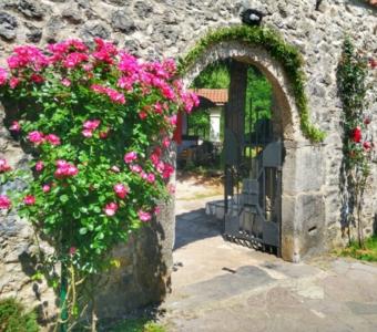 монастырь Морача Черногория вход