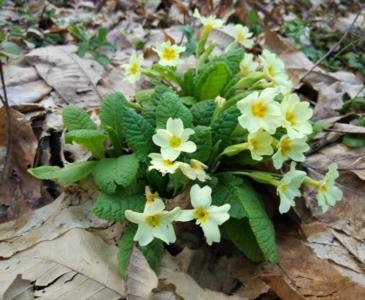 цветы в марте