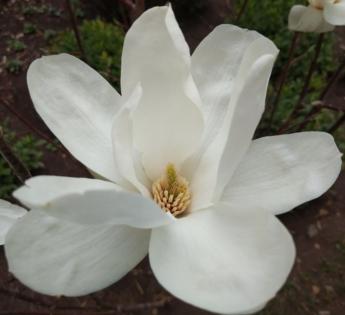 цветы в феврале в Будве