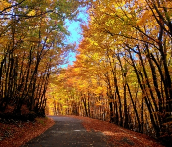Ловчен осенью
