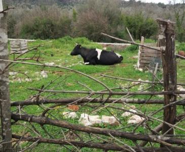 ферма в Черногории