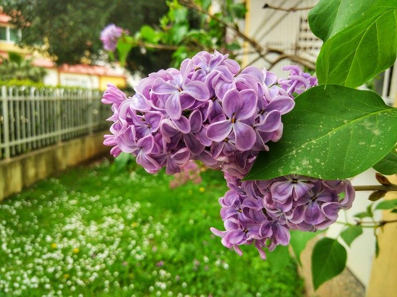 цветы в Черногории
