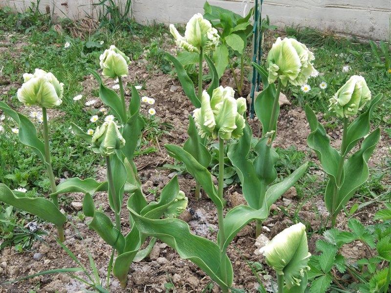 температура в Черногории в апреле