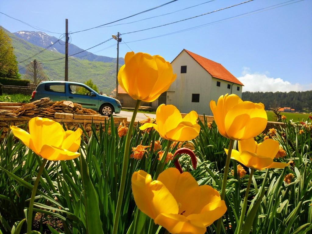 Негуши в Черногории