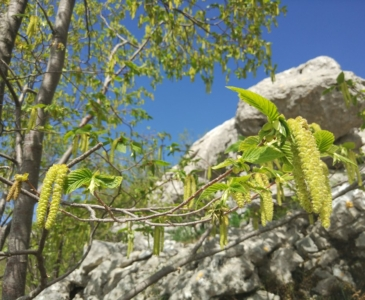 черногория поход в горы