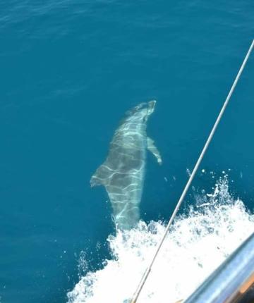 дельфины в Адриатическом моредельфины в Адриатическом море