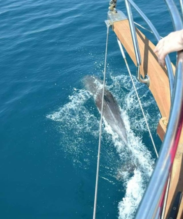 дельфины в Черногории