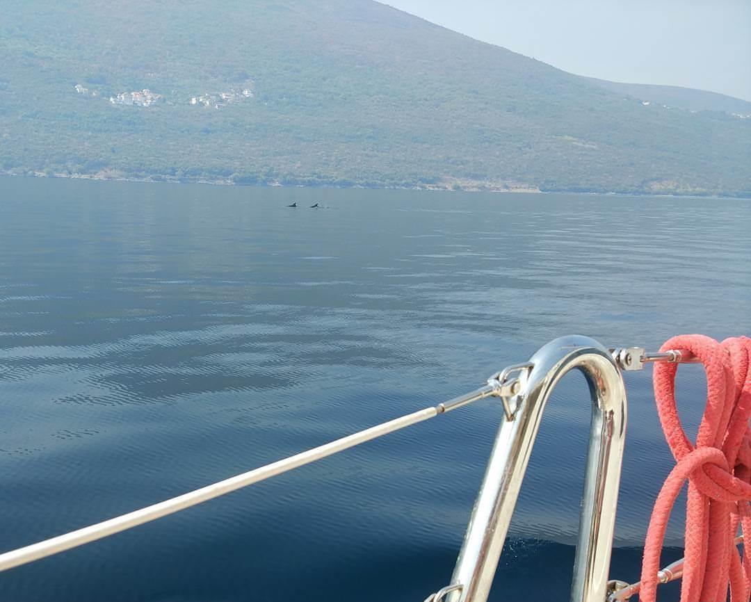 дельфины в Адриатическом море