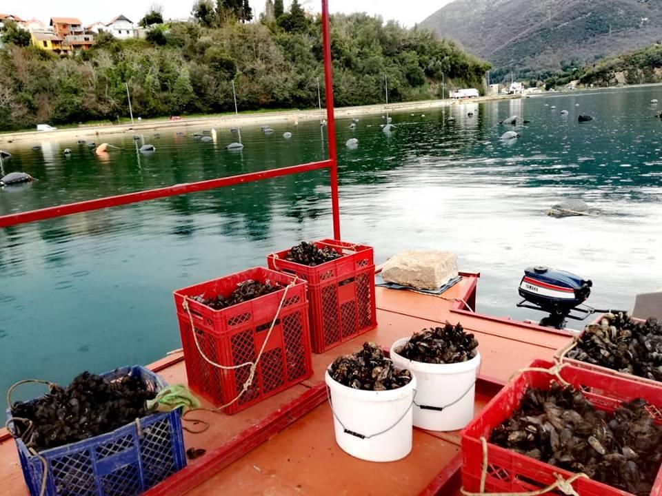 ферма мидий в Черногории