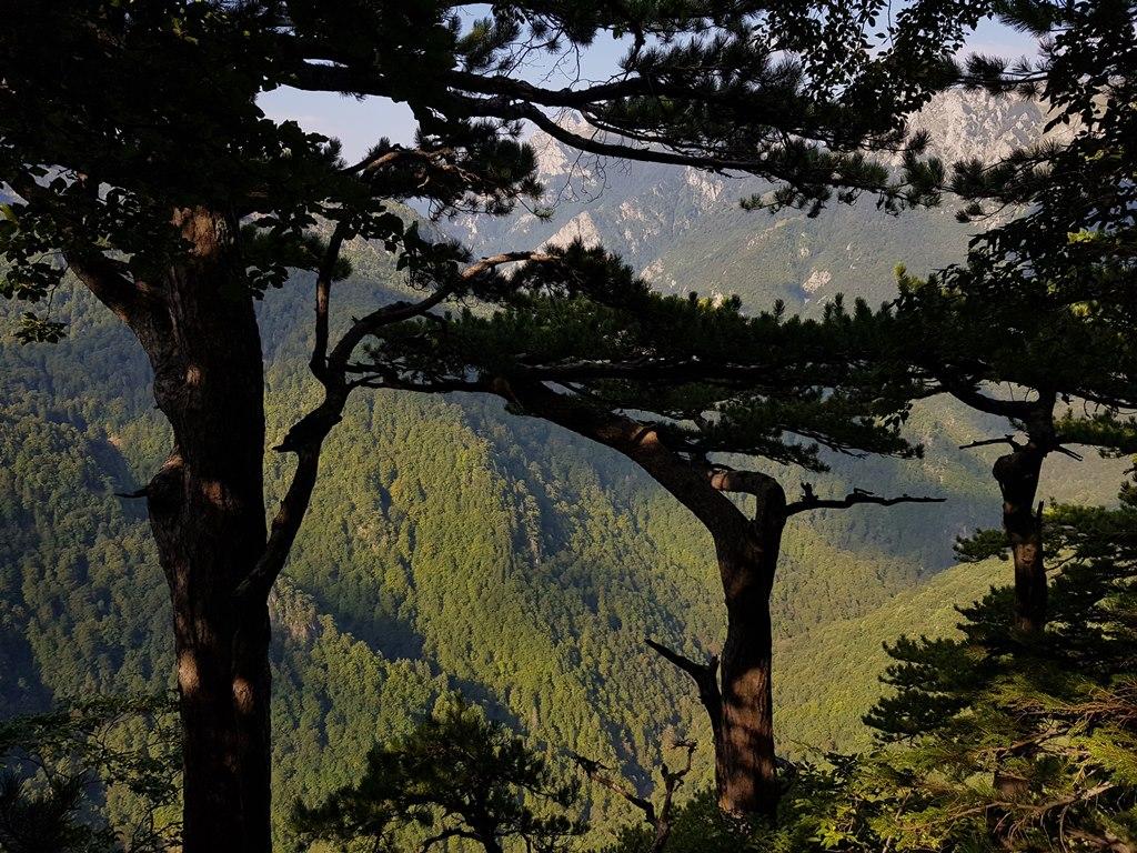 реликтовый лес Перучица