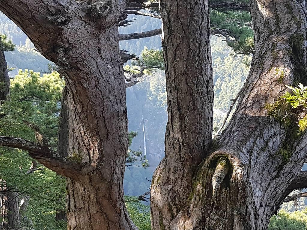 лес Перучица