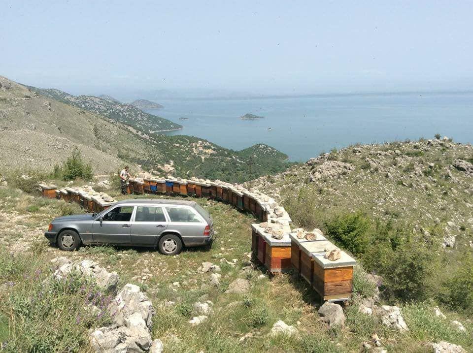 где купить мед в Черногории