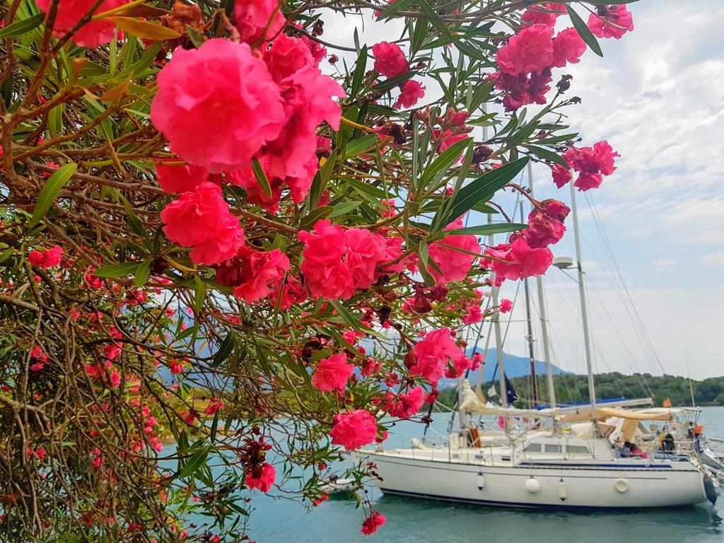 остров Цветов Тиват