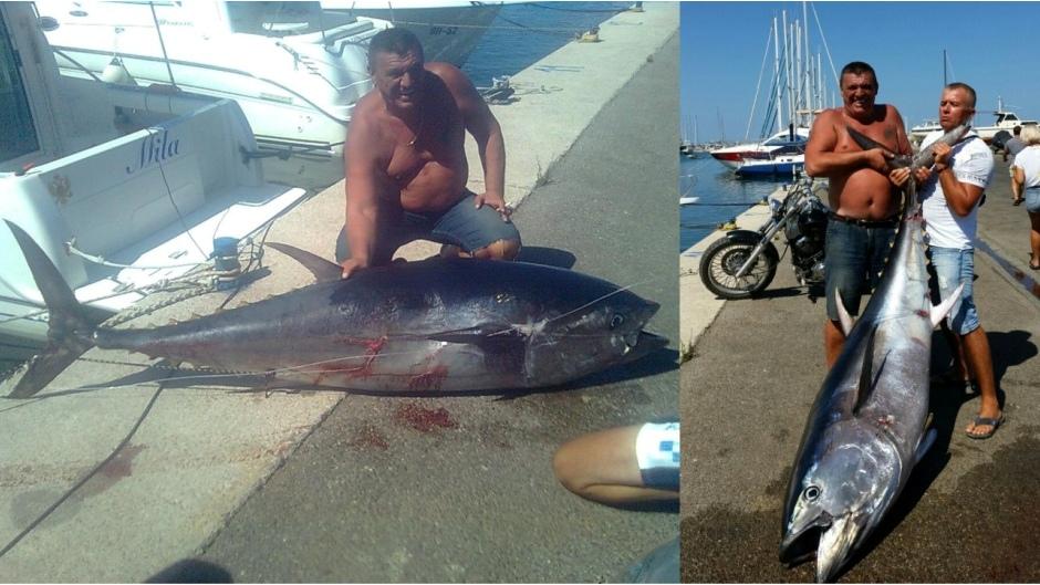 тунец на 133 кг в Баре Черногория