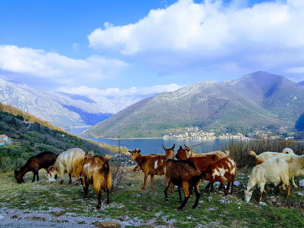 Каменари, Черногория