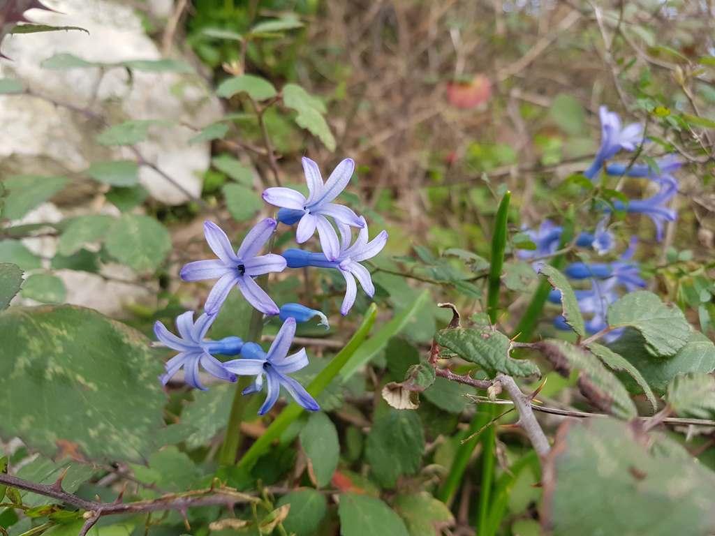 цветы в Черногории в феврале