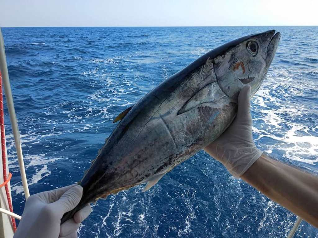 рыбалка в Черногории на яхте