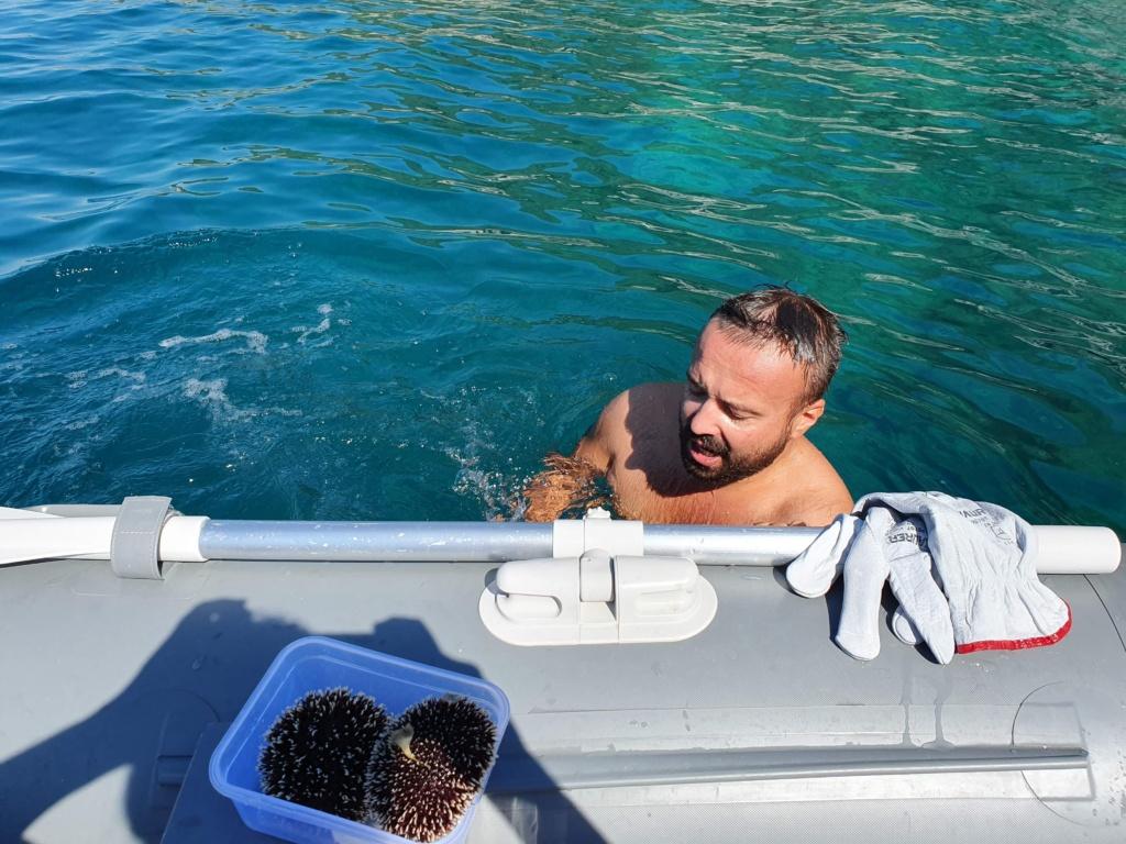 морские ежи в Адриатическом море
