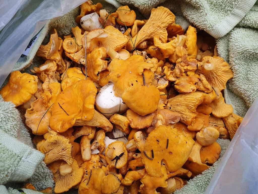 грибы в черногории где собирать