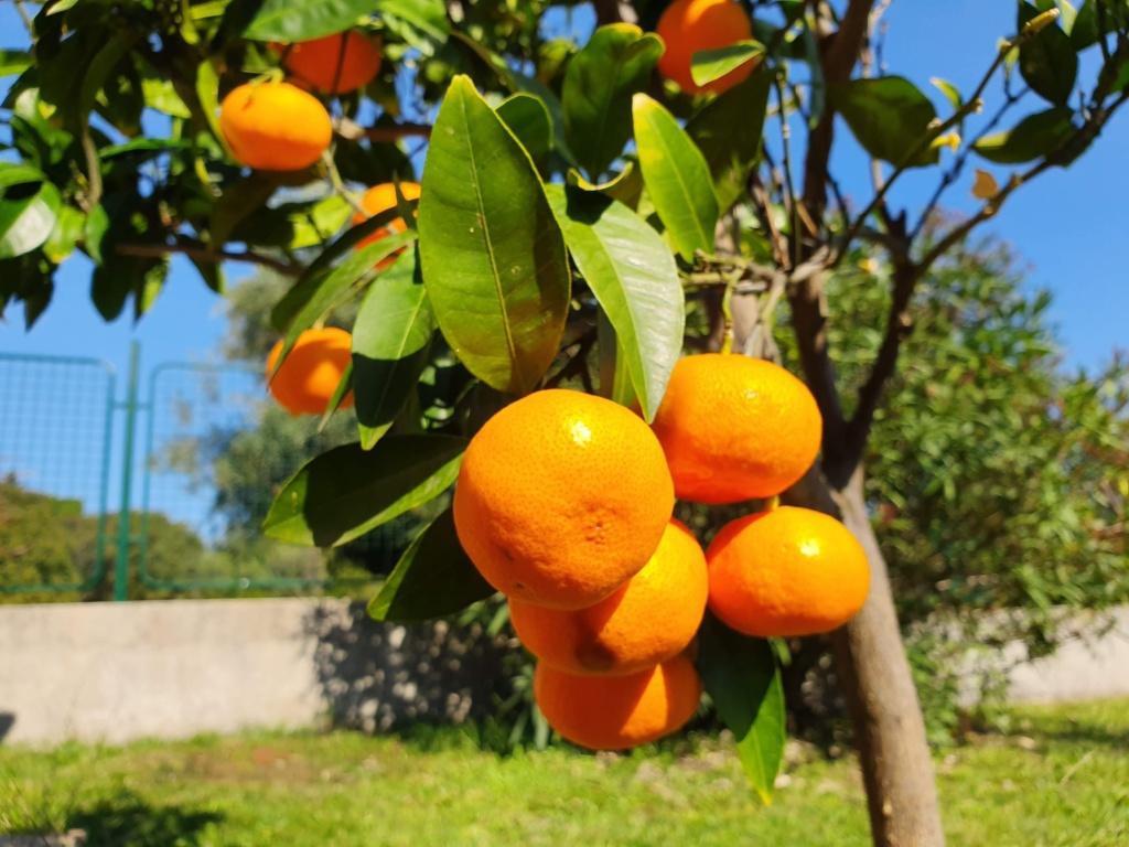 черногория октябрь фрукты