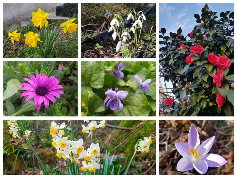 цветы зимой в черногории