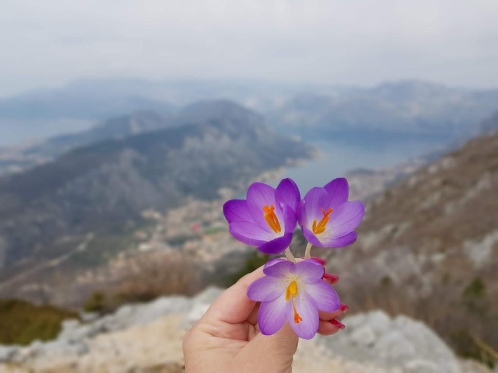 что посмотреть зимой в Черногории