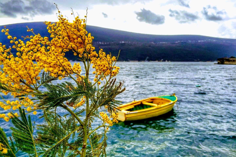 праздник мимозы Черногория